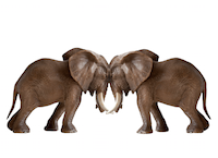 'LOCK-ICON' from the web at 'https://claremont.org/img/pages/thumb/3085Elephants_Fighting_Cropped.png'